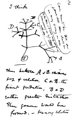 """Darwin's """"I think"""" tree (1837)"""